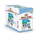 Royal Canin Mini Puppy / Junior Wet Hundefutter, 24 Packungen je 85 g für junge und heranwachsende kleine Hunderassen bis 10 Monate.